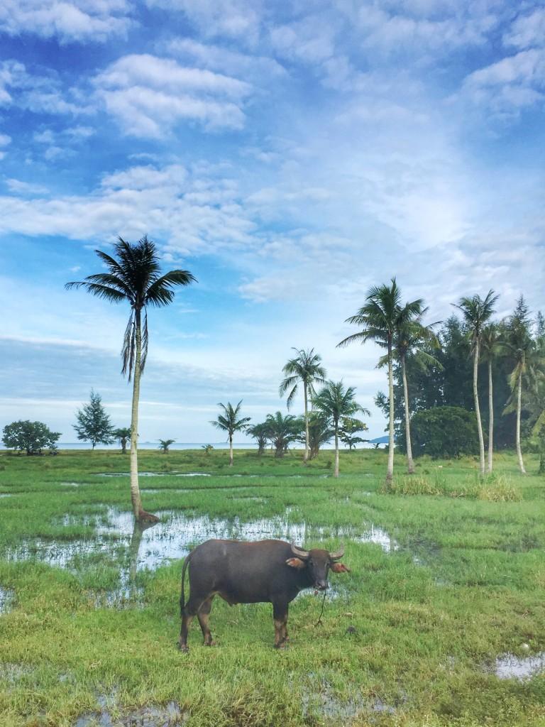 Wasserbüffel, Palmen und Meer Thailand