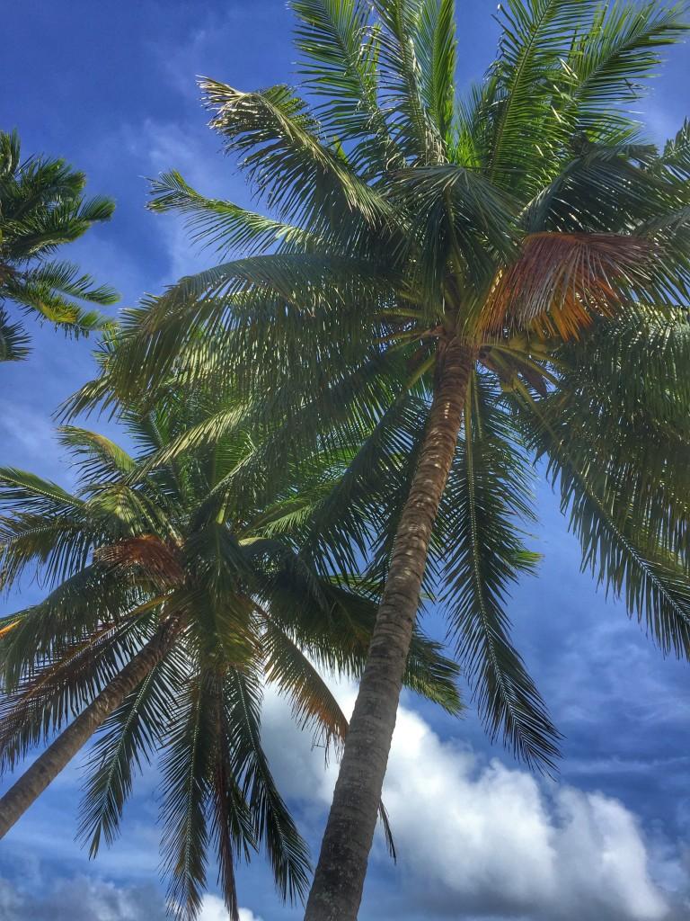 2 Palmen mit Wolkenhimmel