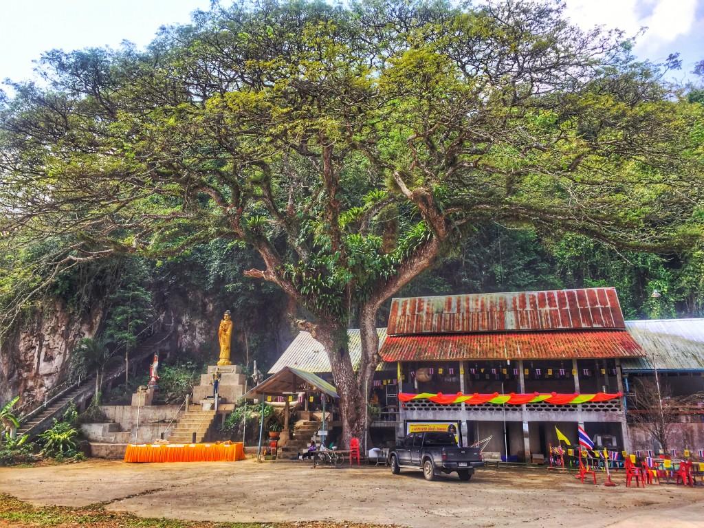 Großer Baum Dschungel Tempel Chumphon Thailand
