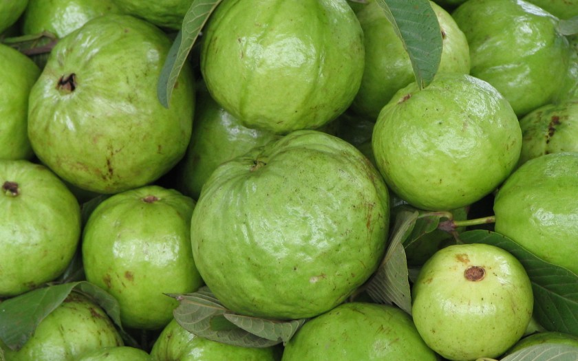 Guave Farang Ja Muh Baxida Chumphon Thailand