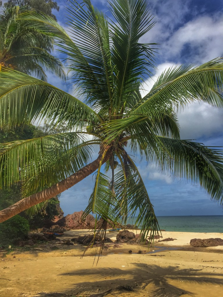 Kokosnusspalme und Meer