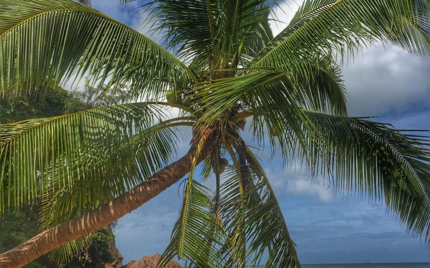 Leben in Thailand - Kokosnusspalme und Meer
