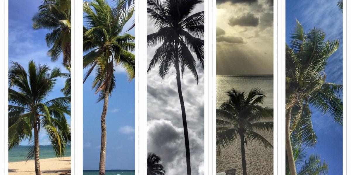 Kokosnusspalme Sehnsuchtsbaum Exotik Chumphon Thailand
