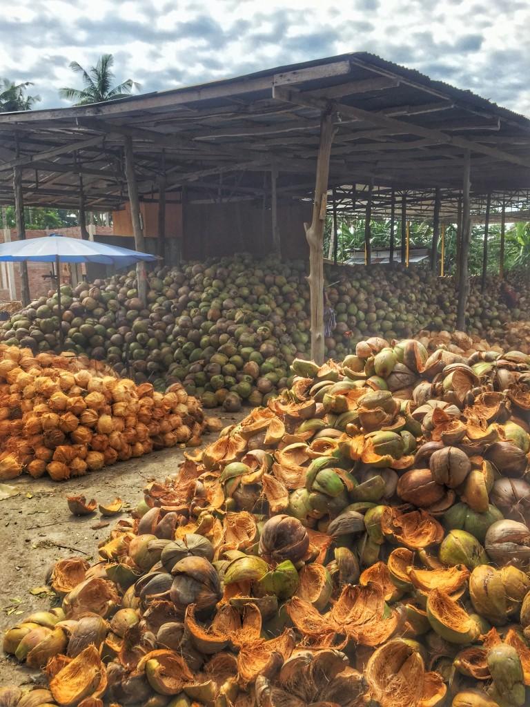 Kokosnüsse Zwischenlager und Verarbeitung Chumphon Thailand