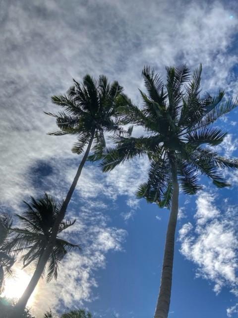 Kokosnusspalme Chumphon Thailland 2