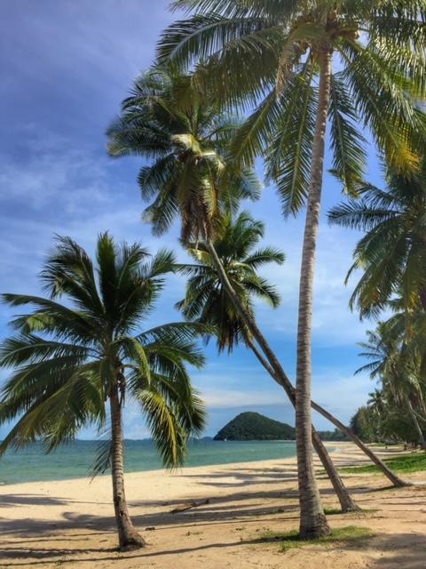 Kokosnusspalme Chumphon Thailand 1