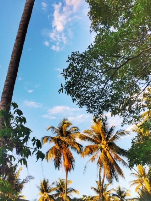 Kokospalmen beim Sonnenuntergang Chumphon