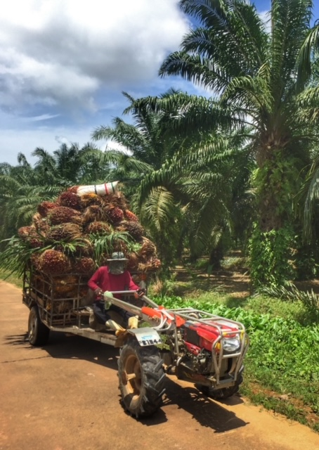Soloselbständig Palmölerntehelfer Chumphon Thailand
