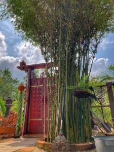 Bambus im Baan Metawi Chumphon Thailand