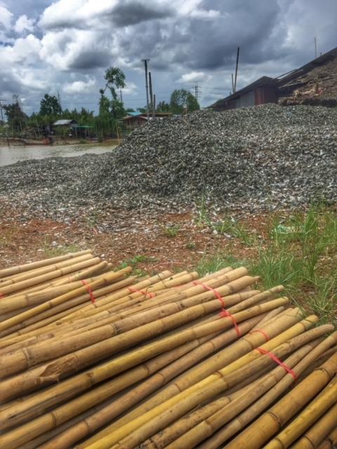 Bambus und Muschelberge in Chumphon Thailand