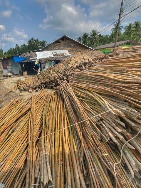 Bambus aus Thailand