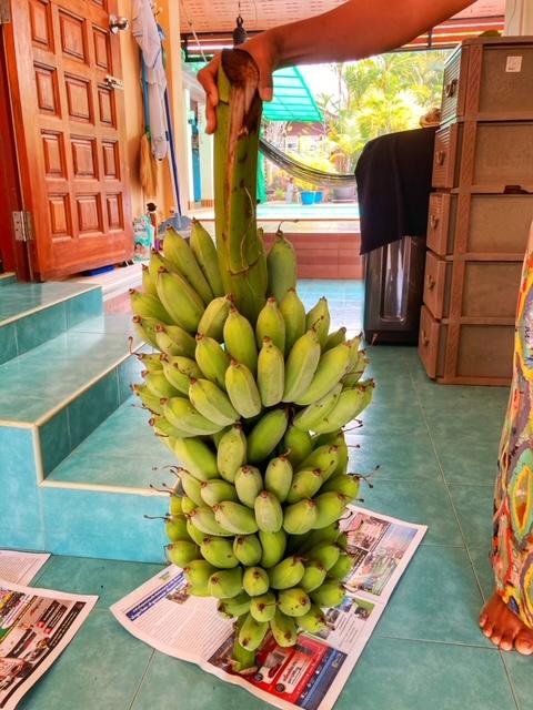 21 kg Bananen, eigener Anbau