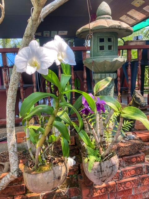 Flora und Fauna auf Baan Metawi, Orchideen