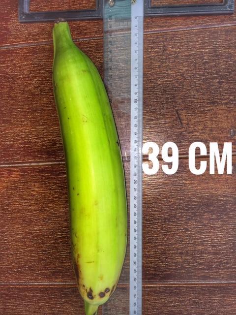 2 kg, nicht für den rohen Verzehr. eine Mega Banane