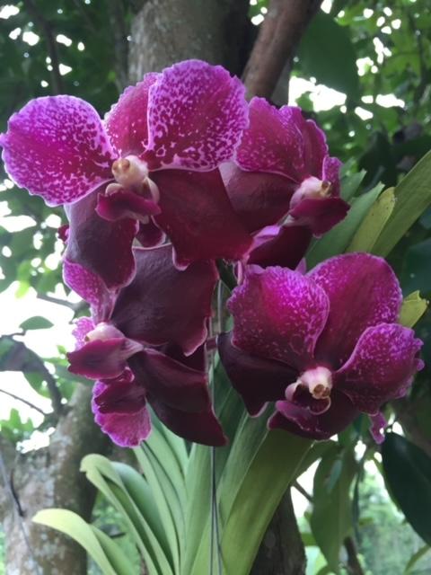 Orchideen auf Baan Metawi, Flora