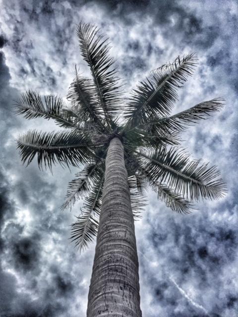 Kokosnusspalme Wolken Regenzeit, Monsun, tropisches Monsunklima, Chumphon Thailand