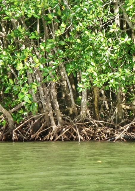 Chumphon Mangroven Thailand