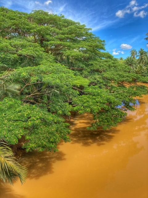 Fluss Baum Chumphon Thailand