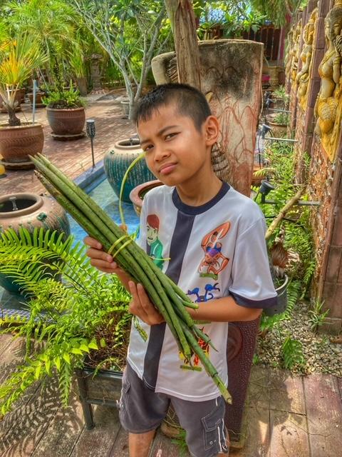 Mangrovensetzlinge Mangrovenwald Lunge der Erde Chumphon Thailand