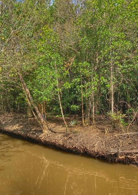 Mangrovenwald Lunge der Erde Klimaschutz Chumphon Thailand