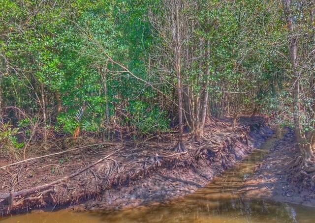 Mangrovenwald Lunge der Erde Klimaschutz Lunge der Erde Chumphon Thailand