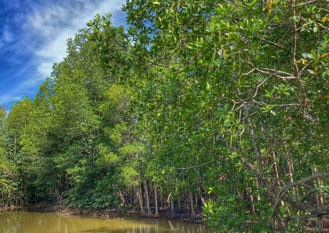 Mangrovenwald Lunge der Erde Klimaschutz Lunge der Erde Thailand