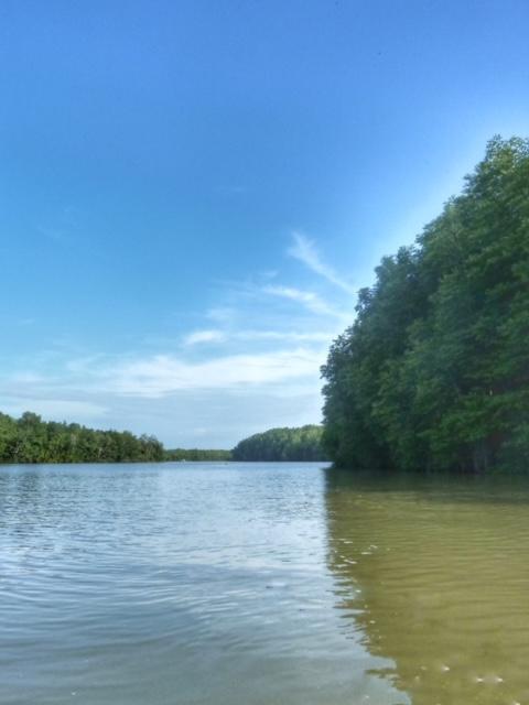 Mangrovenwald Lunge der Erde Chumphon Thailand