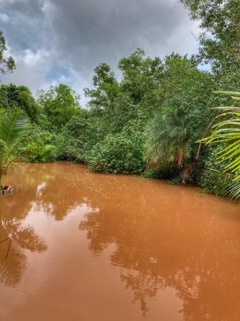 Meerwasserkanal Mangroven Chumphon Thailand