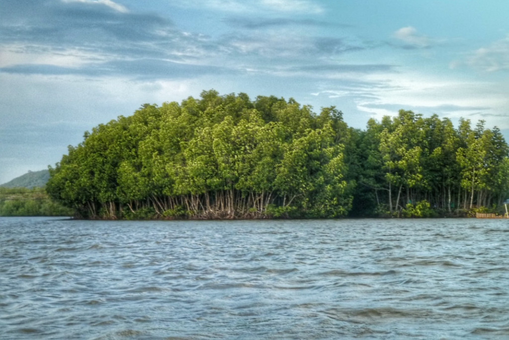 Mangroven, Mangrovenwald, Insel, Chumphon Thailand, Hilfe gegen Klimawandel, Lunge der Erde