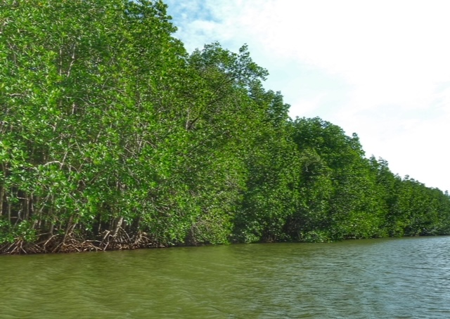 per Kajak Chumphon Mangroven Mangrovenwald Lunge der Erde Thailand