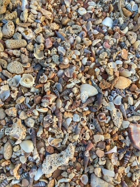 Minimuscheln am Strand