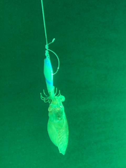 Tintenfisch angeln Chumphon, Thailand