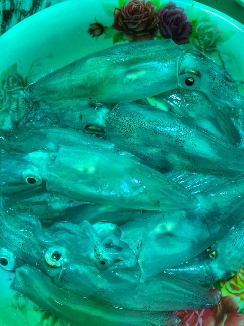 geangelte Tintenfische werden auch roh gegessen