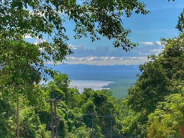 Fernsicht zum Mangrovenwald
