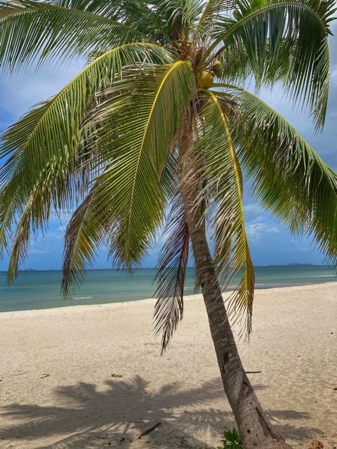 Kokosnusspalme ist Sehnsuchtsbaum, Hilfe gegen die verrückte, chaotische, komplexe Welt
