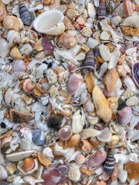 Muschelsuche Thailand, Hilfe gegen die verrückte, chaotische, komplexe Welt