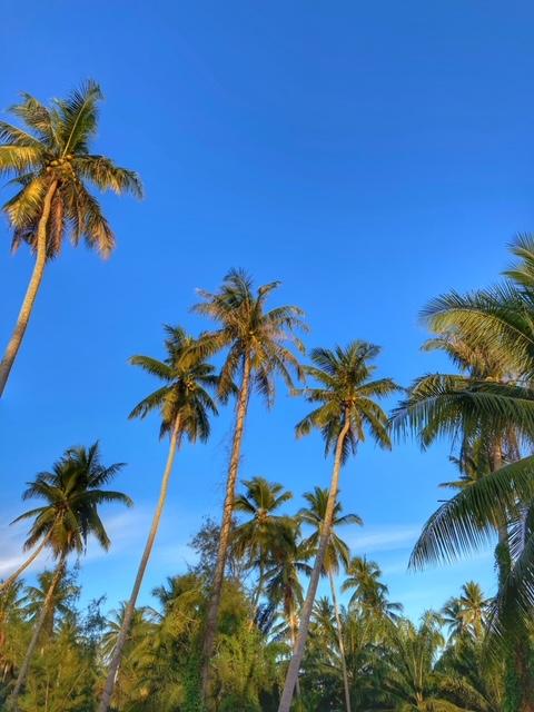 Palmen Abendsonne Chumphon Thailand