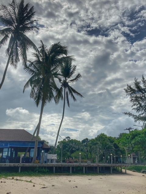 Palmen am Cabana Strand, Hilfe gegen die verrückte, chaotische, komplexe Welt