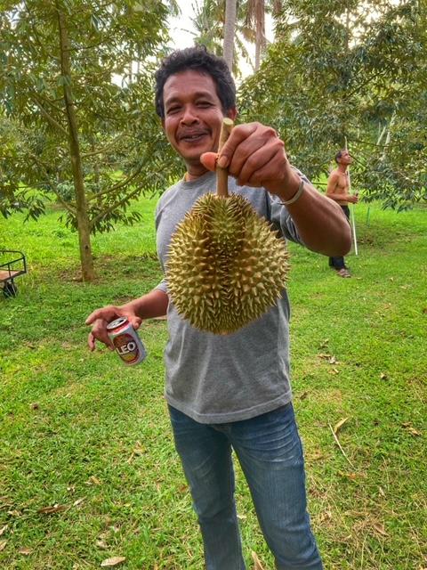 Durian Frucht Durianernte Chumphon Thailand 16
