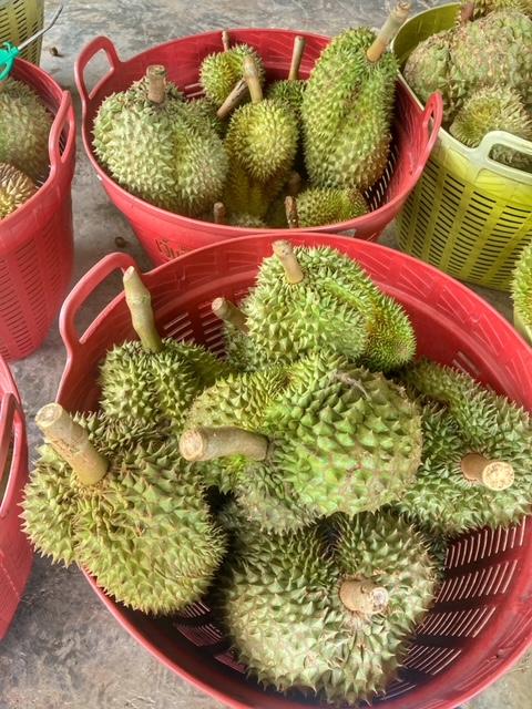 Durian Frucht Durianernte nach Güte und Gewicht