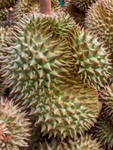Durian, die Waffe