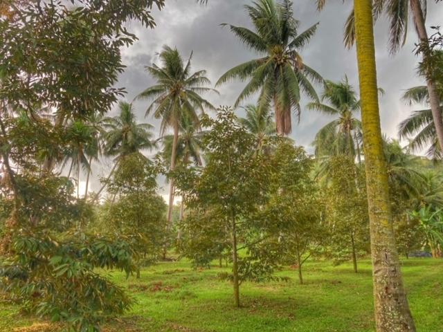 Durianplantage